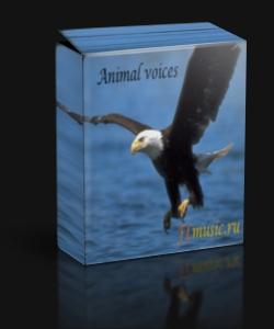 Сэмплы : Звуки живой природы